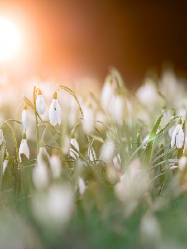 Faire fleurir son potentiel
